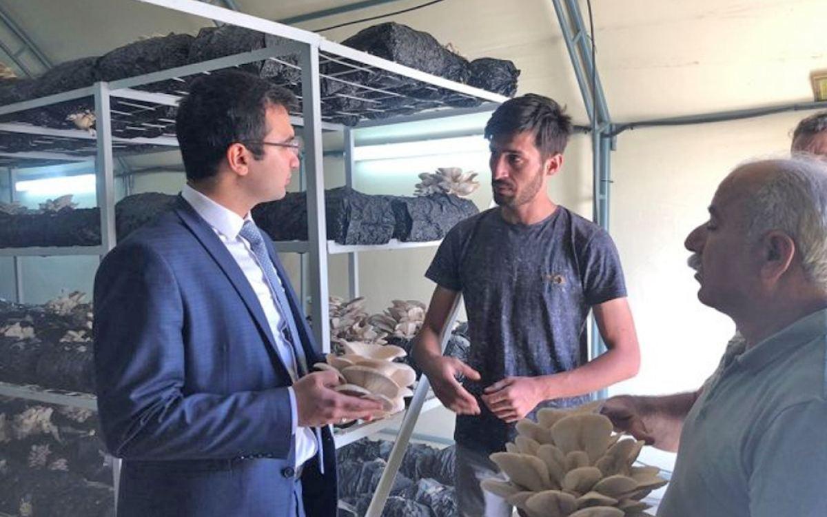 Taşkent Kaymakamı istiridye mantarı üretim tesisini ziyaret etti