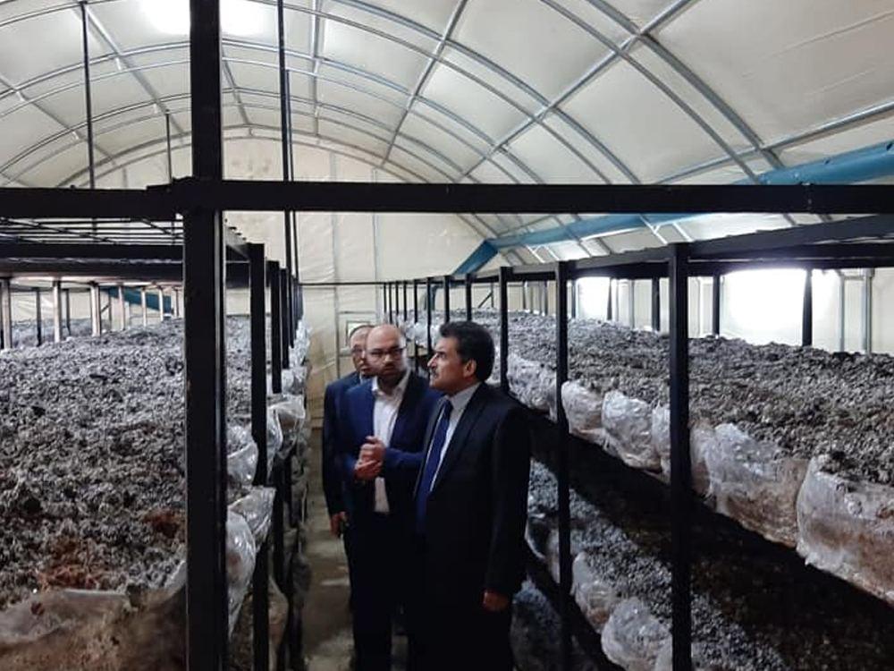 Konya İl Tarım ve Orman Müdürü Ali Ergin mantar seralarında da incelemelerde bulundular.